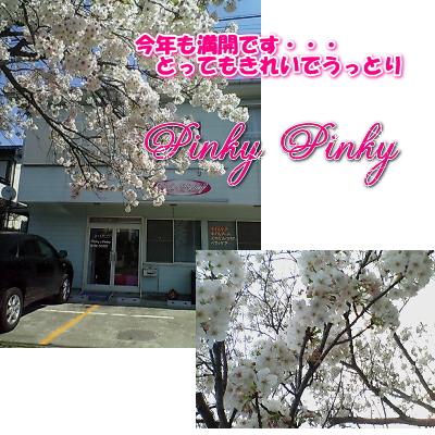 桜・・・1