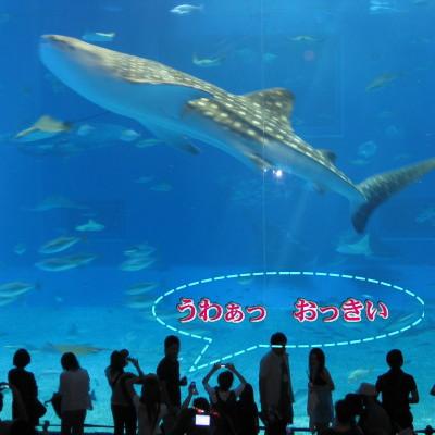 沖縄といえばここ!!1